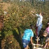 Pregradski osnovnoškolci obilježili Dan jabuka te razveselili štićenike Obiteljskog doma Golubić