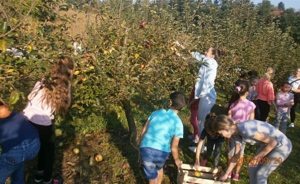 Učenici su zajedno s učiteljima posjetili voćnjak u sklopu Obiteljskog doma Golubić (Foto: zagorje.com)